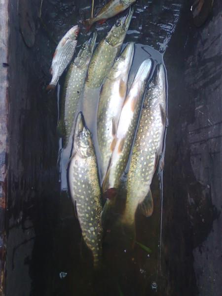 Озеро Липно. Не плохой улов.